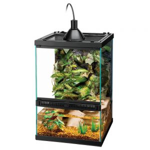 Tropical Reptile Starter Kit