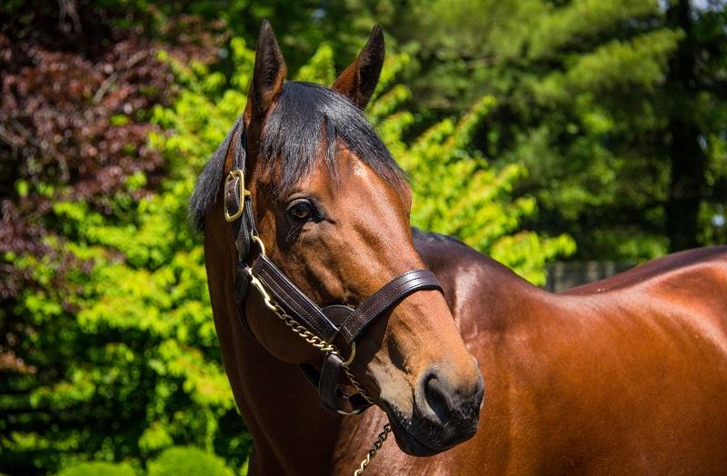 Fundamental Horse Care